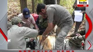 सिवनी पेंच टाइगर रिजर्व में घायल हुई एक बाघिन की जान बचा ली गई #Channel India Live