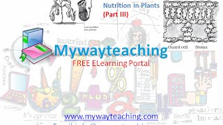 Science Class 7 Chapter 1 Part 3|Nutrition in plant|Science  Chapter 1 for Class 7|