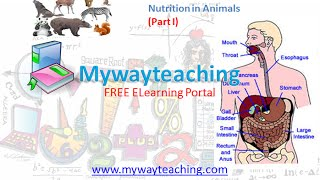 Science Class 7 Chapter 2 Part 1 Nutrition in Animals 