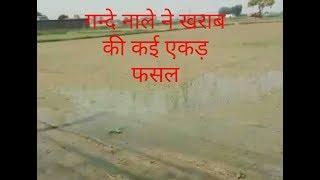 नाले  के रिसाव से खराब हुई फसल Due to the leakage of dirty water in damaged several acres of crop