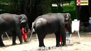 Elepahnt feat Bangkok Safari World