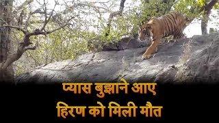 प्यास बुझाने आए हिरण को मिली मौत