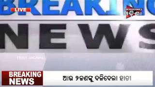 Elephant Attacked In Pipili