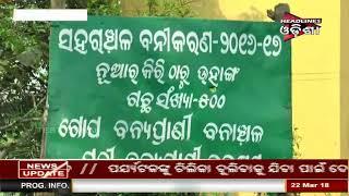 Watch Mafias Looted Plant In Name Of Plantation At Nimapada