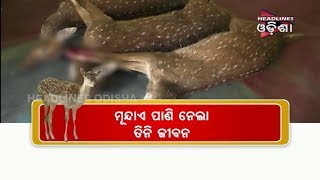 The Life Took Life Of 3 deers In Keonjhar