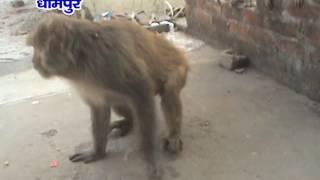 NEWS ABHI TAK DHAMPUR 19.06.16