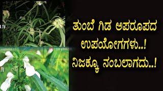 ತುಂಬೆ ಗಿಡದಲ್ಲಿ ನೀವು ಊಹಿಸಲಾಗಿದೆ ಗುಣಗಳನ್ನು ಹೊಂದಿದೆ - ಯಾರಿಗೂ ತಿಳಿಯದ ಮಾಹಿತಿ - Kannada Health Videos