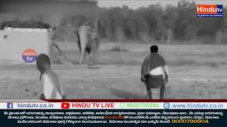 Elephant vandalises house in Chhattisgarh's Surajpur – Chhattisgarh// HINDU TV NEWS