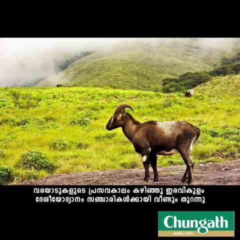 Eravikulam park set to reopen post tahr calving season