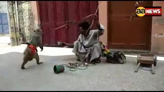 बंदर का तमाशा  Bandr ka tamasha