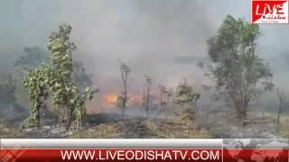 LIVE ODISHA KALAHANDI FOREST FIRE