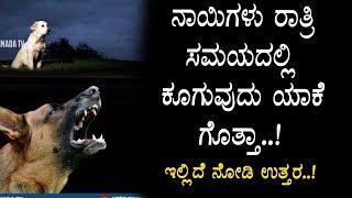 ರಾತ್ರಿ ಸಮಯದಲ್ಲಿ ನಾಯಿಗಳು ಕೂಗುವುದರ ಹಿಂದನ ರಹಸ್ಯ - why does dogs bark during night time