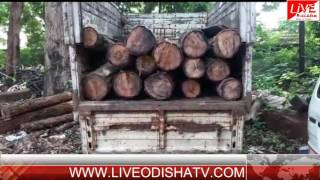 ULUNDA WOOD LOG SEIZED