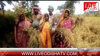 POLASARA FARMER PROBLEM
