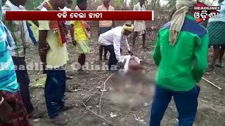 One Person Died In Elephant Attack In Nuapada