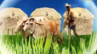 """DPK NEWS - गाँव का रिपोर्ट कार्ड / मंडोर ( जोधपुर ) तहसील का """"""""जालेली नायला"""""""" ग्राम पंचायत"""