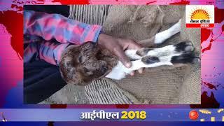दो मुँह वाली बकरी को देखने के लिए ग्रामीणों का लगा ताँता #Channel India Live