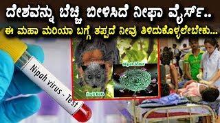 ದೇಶವನ್ನು ಬೆಚ್ಚಿ ಬೀಳಿಸಿದೆ ನೀಫಾ ವೈರ್ಸ್ | Niphas Virus in Kannada | Tips to Avoid Nipah virus