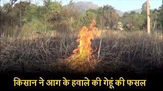 किसान ने आग के हवाले की गेहूं की फसल, वजह चौंकाने वाली