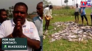 HUNDREDS OF FISH DEAD IN LAKE AT THARAMATHIPET RANGAREDDY TV11 NEWS 18TH APR 2017