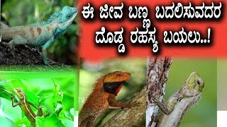 Facts About Lizards | Real facts about Lizards colour changing | Top Kannada TV