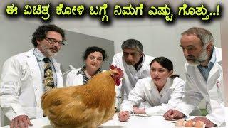 ಈ ವಿಚಿತ್ರ ಕೋಳಿ ಬಗ್ಗೆ ನೀವು ನೋಡಲೇಬೇಕು | half chicken half men | ಕನ್ನಡ ನ್ಯೂಸ್
