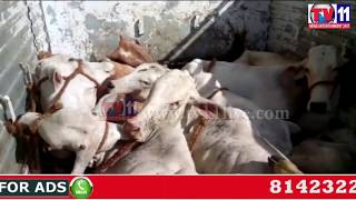 POLICE CAUGHT ILLEGAL TRANSPORT OF COWS IN ABDULLAPURMET HYDERABAD TV11 NEWS 22ND JUNE 2017