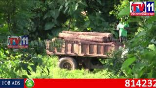 POLICE SEIZE 55,000/- WORTH TIMBER, SMUGGLING AT HITECH COLONY, NIRMAL TV11 NEWS 30TH AUG 2017