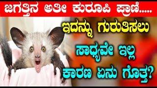 ಇದನ್ನು ಗುರುತಿಸಲು ಸಾಧ್ಯವೇ ಇಲ್ಲ ಕಾರಣ ಏನು ಗೊತ್ತ | Kannada Unknown Facts