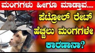 ಪೆಟ್ರೋಲ್ ರೇaಟ್ ಹೆಚ್ಚಲು ಮಂಗಗಳೇ ಕಾರಣಾನಾ | Crazy news on Monkeys