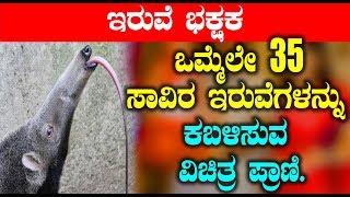 ಒಮ್ಮೆಲೇ 35 ಸಾವಿರ ಇರುವೆಗಳನ್ನು ಕಬಳಿಸುವ ವಿಚಿತ್ರ ಪ್ರಾಣಿ | Unknown News