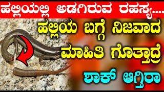 Unknown Facts about Lizard : ಹಲ್ಲಿಯ ಬಗ್ಗೆ ನಿಜವಾದ ಮಾಹಿತಿ ಗೊತ್ತಾದ್ರೆ ಶಾಕ್ ಆಗ್ತಿರಾ