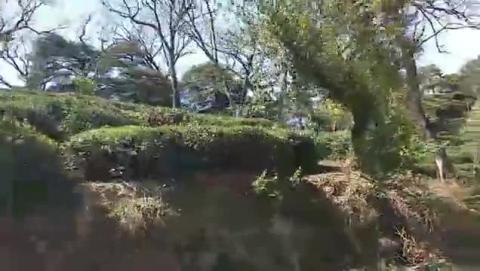 Tea Gardens Dharamshala