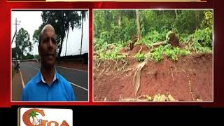 20 'dangerous trees' to be felled along Chicalim-Cortalim Highway