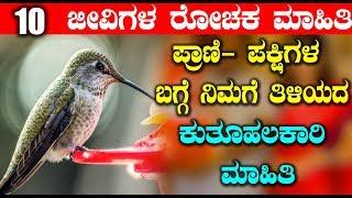 ಪ್ರಾಣಿ  ಪಕ್ಷಿಗಳ ಬಗ್ಗೆ ನಿಮಗೆ ತಿಳಿಯದ  ಕುತೂಹಲಕಾರಿ ಮಾಹಿತಿ | Unknown Facts about Birds | Top Kannada TV