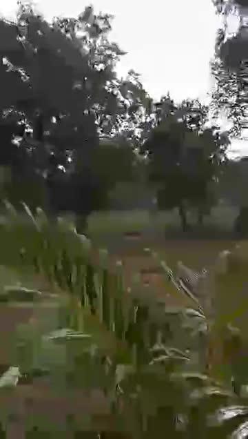 Heavy Rain Dharamshala