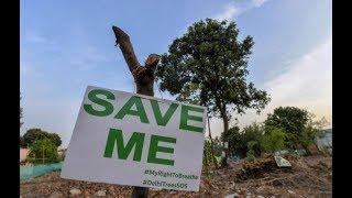 दिल्ली की सांसों पर फिलहाल नहीं चलेगी आरी || 19 जुलाई तक लगी पेड़ काटने पर रोक
