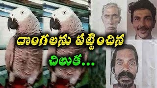 parrot helped police to trace the thieves I Rec tv india
