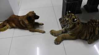 New Dog, Silly Tiger, Clumsy Move, Sory