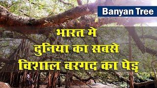 TRS Govt develop For Pillalamarri Banyan Tree In Palamuru