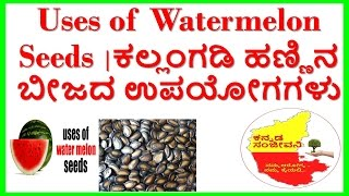 uses of watermelon seeds..health benefits of watermelon seeds..