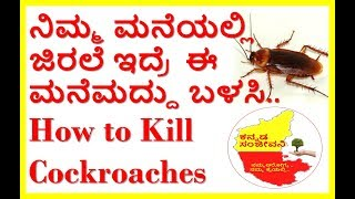 How to Kill Cockroaches Naturally...Kannada Sanjeevani
