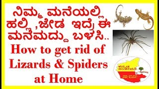 How to Get Rid of Lizards & Spiders at Home..Kannada Sanjeevani.