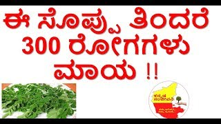 Health Benefits of Moringa leaves ( Drumstick leaves)| Drumstick leaves|Uses| Kannada Sanjeevani