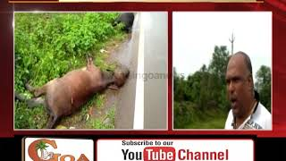 Cattle killed in road accident