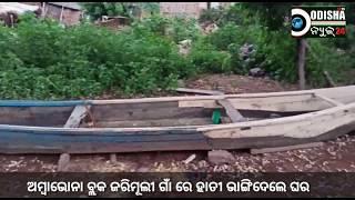Elephant damage House # ambabhona, Bargarh