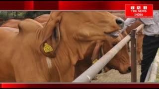 TELANGANA- और अन्ध्राप्रदेश में जानवरों पर क्रुरता को रकने के लिए उठाये ठोस कदम