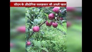 रुद्रप्रयाग के गैड़ में सेब की खेती