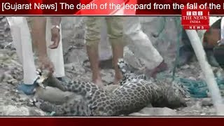[Gujarat News] The death of the leopard from the fall of the leopard in Gujarat Khawl THE NEWS INDIA