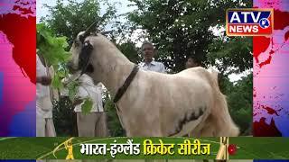 फर्रुखाबाद में बकरा बना चर्चा का विषय #ATV NEWS CHANNEL (24x7 हिंदी न्यूज़ चैनल)